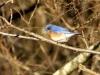 Feb. Snow - Bluebird