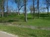 Green Spring grass - 1