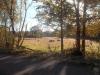 Pasture scene at Mile 36