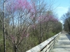 Redbuds on the Trail - 2