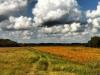 Soybean field by Amy Bowling