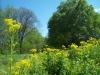 Yellow flowers on Trail near Houlka