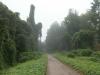 Kudzu in the morning mist