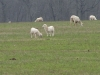 Lambing season in Algoma